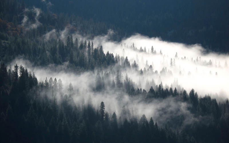 Wispy cloud covering over a conifer forest in the Sierra Nevada