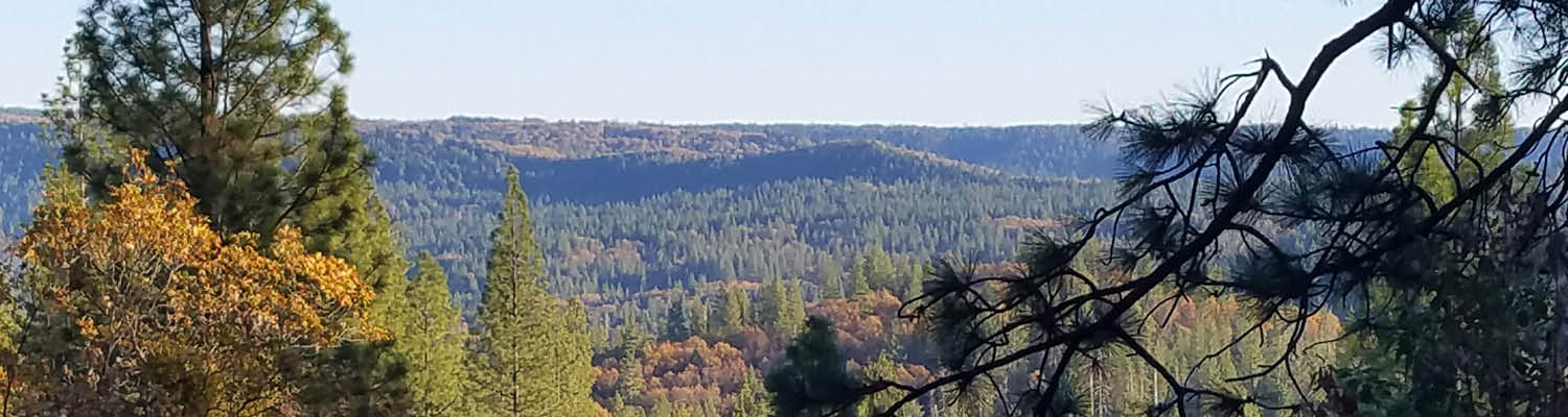 view overlooking a Sierra Nevada landscape of trees