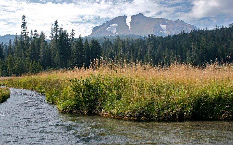 creek running through a high sierra meadow