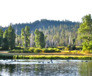 Waterbody in the Sierra Nevada