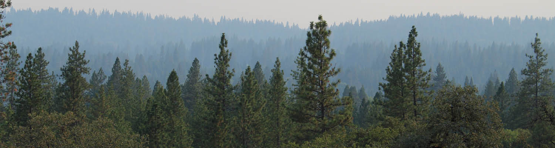 Smoky forested landscape
